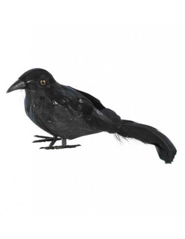Cuervo con plumas